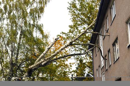 Onweerschade met gevallen berk en beschadigd huis na orkaan Herwart in Berlijn, Duitsland Stockfoto