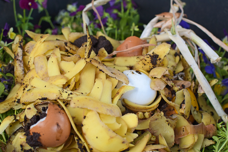 View into a bio container  with various organic wastes such as potato peels, eggs, escallion and flowers for recycling Stok Fotoğraf