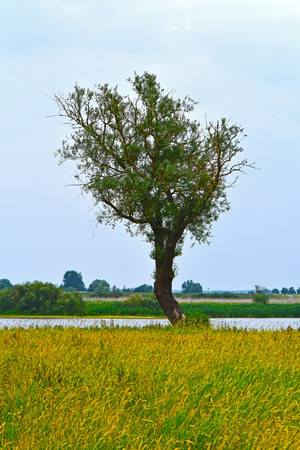 An alone standing tree on a meadow near the Elbe River at the small medieval town Hitzacker, Germany