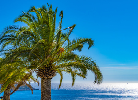 View to a big palm tree on the promenade of Nice, France, against the ocean and a bright blue sky.
