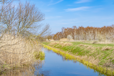 Blue sky over a little creek at a sunny spring day in the surrounding countryside of Berlin, Germany. On the right bank you can see the young shoots of the reeds in the water. Stock Photo