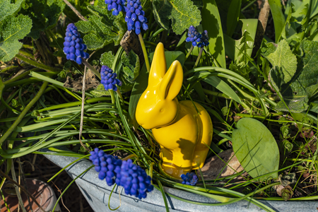 Yellow ceramic Easter bunny with grape hyacinths (Muscari) around it in an old metal tray.
