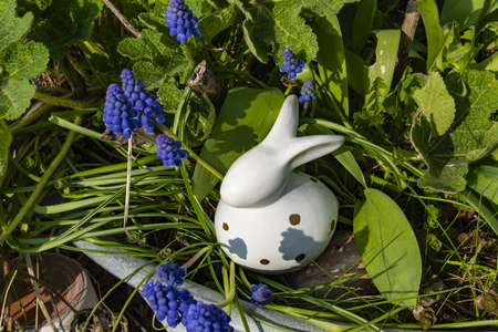 White ceramic Easter bunny with grape hyacinths (Muscari) around it in an old metal tray.