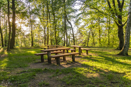View of a resting place in the forest illuminated by the setting sun whose rays shine through the trees.