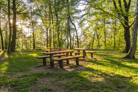 Vista di un luogo di riposo nella foresta illuminata dal sole al tramonto i cui raggi brillano tra gli alberi.
