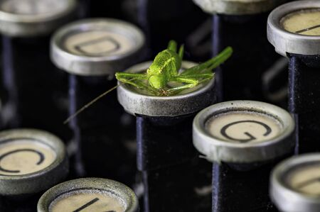 Macro shot of a grasshopper (Acrididae) sitting on the keyboard of a historic typewriter.
