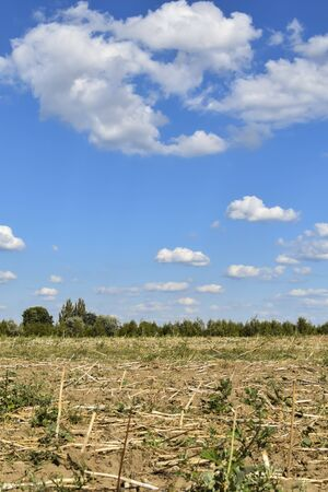 View of a harvested field that has dried up from the drought.