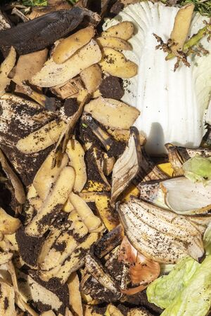 View into a bio container  with various organic wastes such as potato peels and salad for recycling.