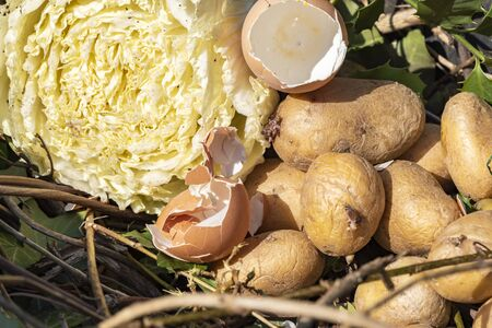 View into a bio container  with various organic wastes such as potatos and salad for recycling. Stok Fotoğraf