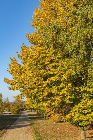 Trees with colorful autumn leaves at a small path in the sunlight in Berlin, Germany.