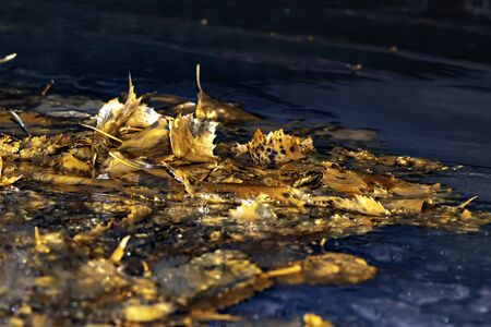 Leaves trapped in frozen water.