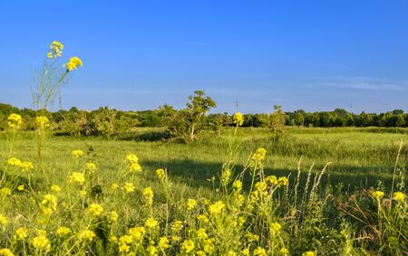 View over flowers and meadows to the blue sky in the surrounding of Berlin, Germany. Stok Fotoğraf