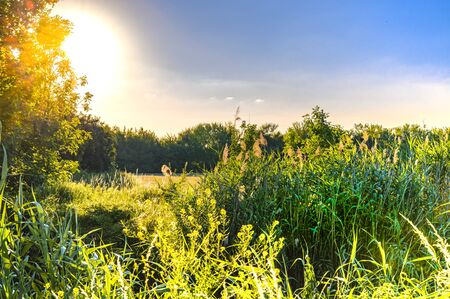 View over flowers and meadows to the blue sky in the light of the setting sun in the surrounding of Berlin, Germany.