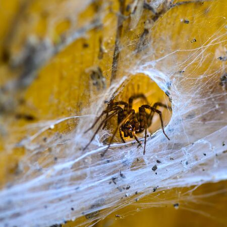 Closeup of a spider in spider web on wooden planks. Stockfoto