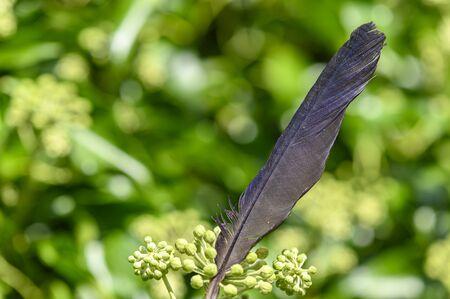 A fancy bird feather lying on a bush.
