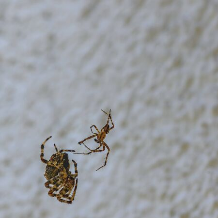 Fight between two differently sized spiders in front of a house wall.