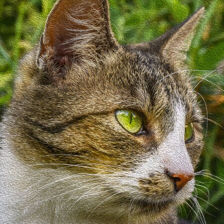 Portrait of a young striped cat relaxing in the garden in sunlight. The photo was edited in the style of an oil painting.