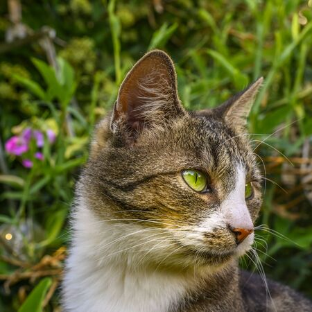 Portrait of a young striped cat relaxing in the garden in sunlight. Stok Fotoğraf