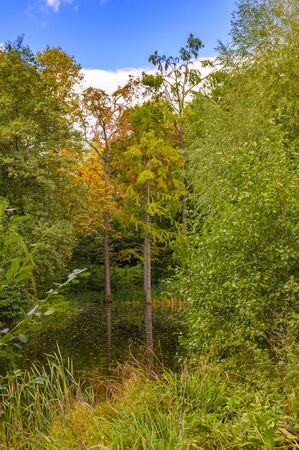 Rural scene with a pond and autumnal colorful trees on the shore. Stok Fotoğraf
