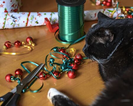 Black cat in the midst of Christmas decoration, which serves to embellish gifts of a Christmas calendar.
