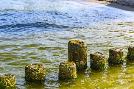 Wooden groynes covered with yellow-green algae (Xanthophyceae).