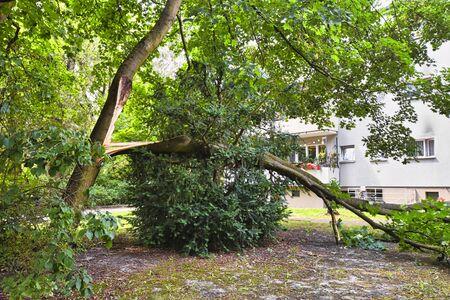 Dommages causés par la tempête avec un arbre tombé, qui a raté de peu une maison après un vent violent à Berlin, Allemagne