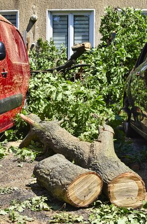 The remains of a fallen tree after a heavy storm in Berlin, Germany. The sawn tree trunk lies between two damaged cars.
