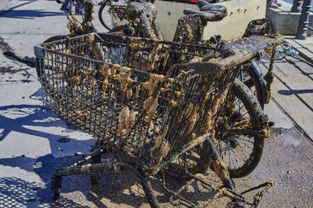 Bicycles and other objects completely covered with mud, algae and barnacles were recovered by committed citizens from the Spree river in central Berlin.
