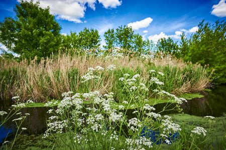 Blue and cloudy sky over a little creek in the surrounding countryside of Berlin, Germany. Standard-Bild - 147784272