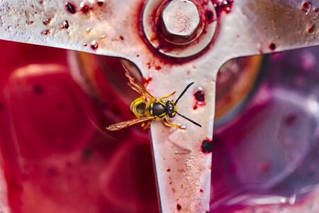 Wasp sitting on the blade of a blender and eating the leftovers of a smoothie.