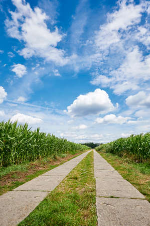Path between corn fields (Zea mays) from a kneeling perspective in the outskirts of Berlin, Germany, under a blue sky with white clouds. 写真素材
