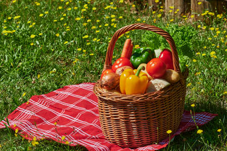 Basket of various vegetables in the sunlight on a meadow with yellow flowers. Standard-Bild