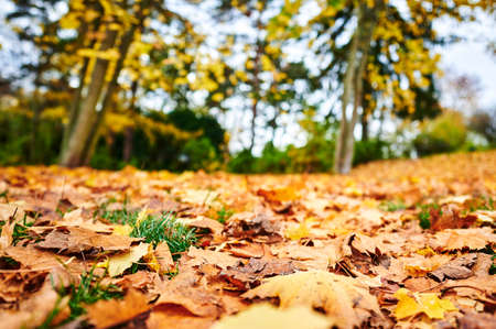 On the ground lying golden autumn leaves on a footpath in a park.