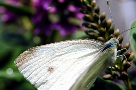 close up of white butterfly in the garden