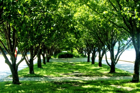 tree canopy: Shady Trees on a hot sunny day Stock Photo