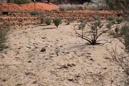 Plants growing in sandy soil conditions, Botanical Gardens, Canberra, Australia Stok Fotoğraf