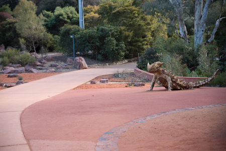 Large lizard sculpture greets visitors to the Botanical Gardens, Canberra, Australia