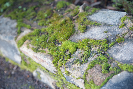 rock-wall covered in moss, Botanical Gardens, Canberra, Australia