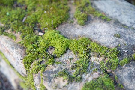 Mossy rock, Botanical Gardens, Canberra, Australia Stok Fotoğraf