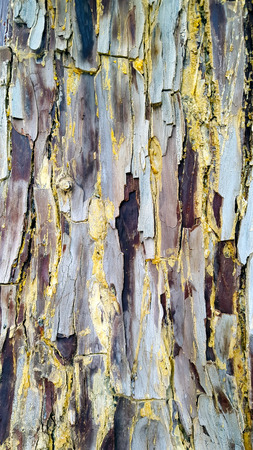 Textured and coloured tree bark closeup with red maroon grey and blue.