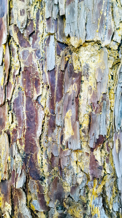 Textured and flakey tree bark. Red, blue white grey.