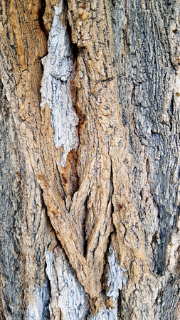 Textured tree bark with brown and red coulours. Imagens