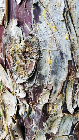 Textured tree bark with resin and colours. Blue red maroon.