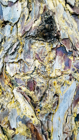 Textured closeup of tree bark with many colours. Imagens - 106960513