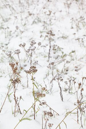 A fragment of a meadow covered with the first snow. Selective focus