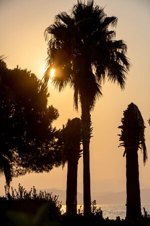 Palm tree silhouette in the orange rays of the setting sun