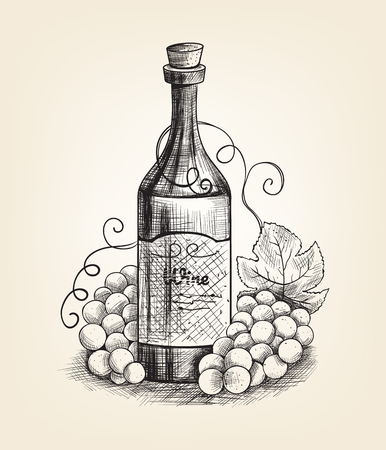 Grapes and wine. Hand drawn pencil ink style. Vector flat illustration Illustration