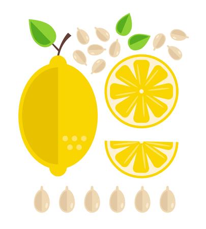 Different part of lemon fruit cutting. Fresh fruits concept. Vector flat cartoon design graphic illustration icon