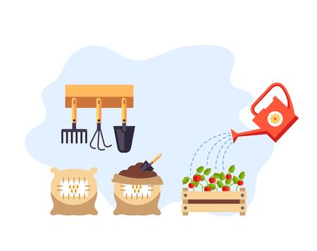 Tomato seeds growing steps. Vector flat cartoon graphic design illustration