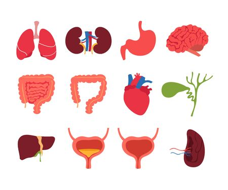 Human internal organs isolated set collection. Vector flat graphic cartoon illustration design